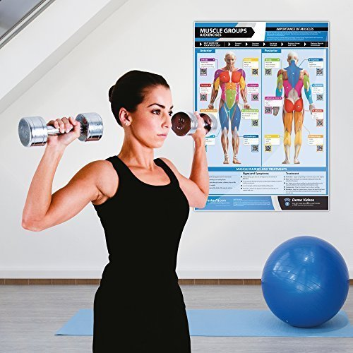 Gym-Exercise-Workout-Posters-Anterior-Posterior-Muscles-Muscle-Building-Exercises-Laminated-Gym-Home-Poster-FREE-Online-Video-Training-Support-Large-Size-33-X-235-Improves-Fitness-0-1