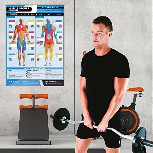 Gym-Exercise-Workout-Posters-Anterior-Posterior-Muscles-Muscle-Building-Exercises-Laminated-Gym-Home-Poster-FREE-Online-Video-Training-Support-Large-Size-33-X-235-Improves-Fitness-0-2