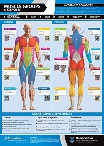 Gym-Exercise-Workout-Posters-Anterior-Posterior-Muscles-Muscle-Building-Exercises-Laminated-Gym-Home-Poster-FREE-Online-Video-Training-Support-Large-Size-33-X-235-Improves-Fitness-0